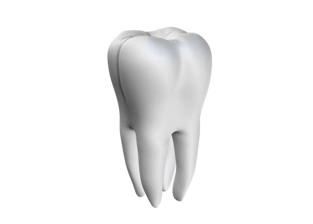 Illustration of a white tooth